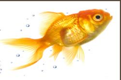 Mentorfish
